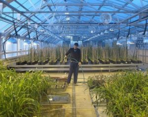 Interior of The Land Institute's Research Greenhouse.